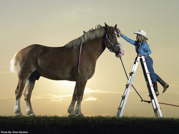 Priefert's Radar, Belgian gelding - tallest horse in world 2006 - 2009